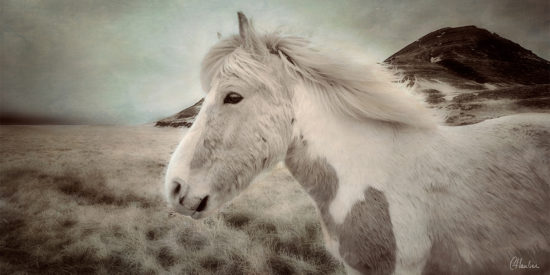 Icelandic Horse in infrared with multiple texture layers.